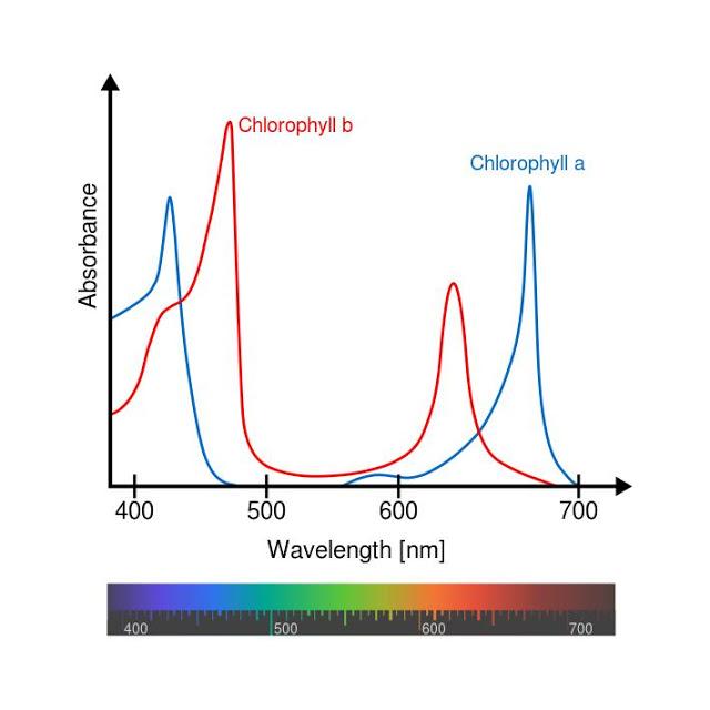 Chlorophyll_ab_spectra-en