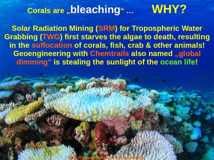 Coral_Bleaching_WHY_EN